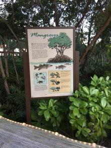 Mangroves, The Ritz-Carlton, Naples, FL - tennistravelsite.com