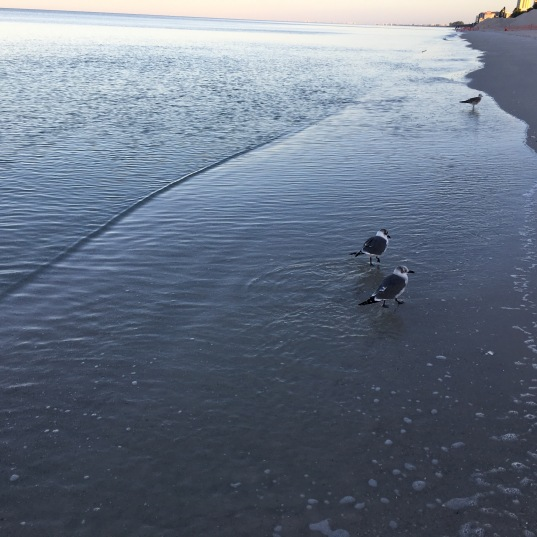 Just me and the seagulls, waiting for sunrise, The Ritz Carlton, Naples, FL