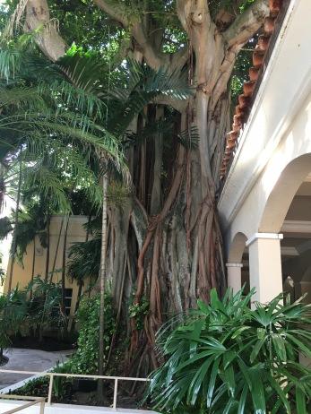 Banyan Tree,Turnberry Isle Miami, Miami, FL