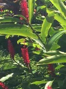 Beautiful Hawaiian flowers, The Ritz Carlton Kapalua, Maui, Hawaii